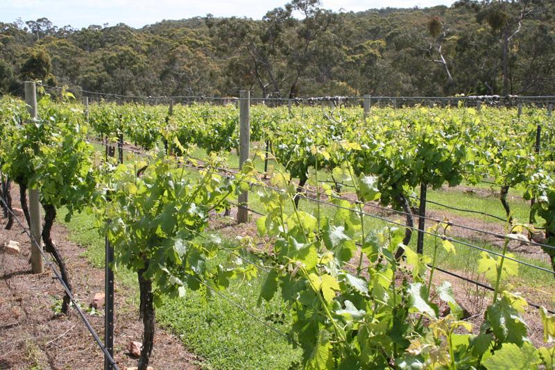 vines01